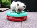 kitten_spielzeugp1040284-jpg
