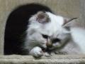 kitten_051113