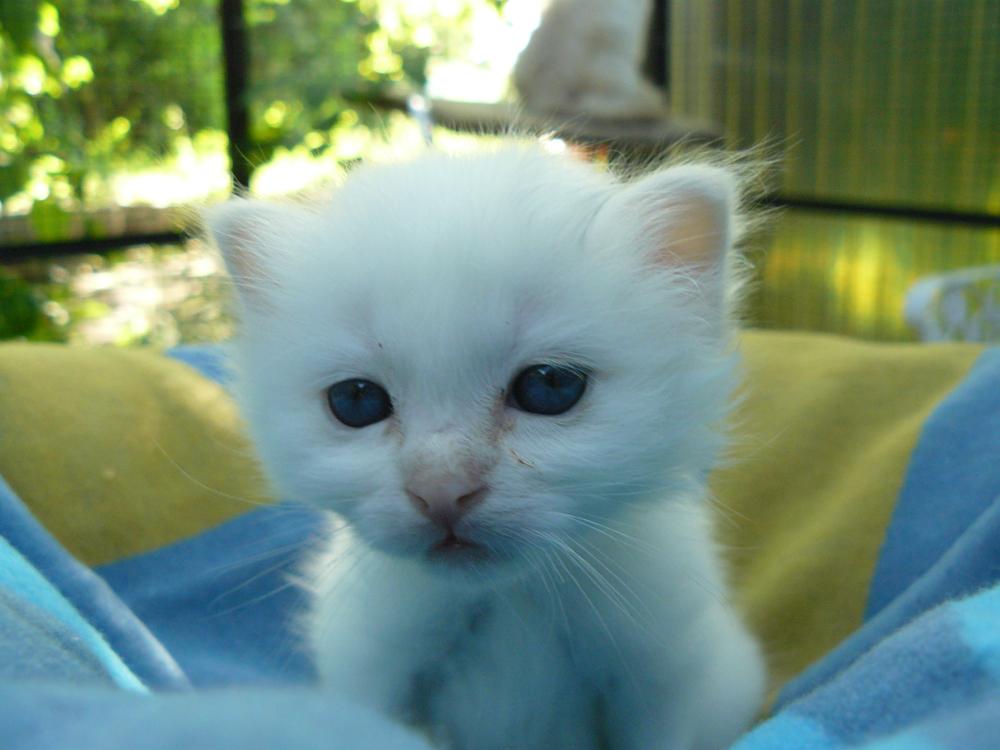 kitten_wurfbox-jpg