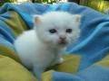 kitten_wurfbox_p1040254-jpg